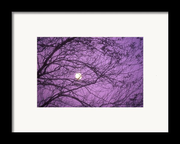 Tree Silhouettes With Rising Moon In Cades Cove, Great Smoky Mountains National Park, Tennessee, Usa Framed Print By Altrendo Nature