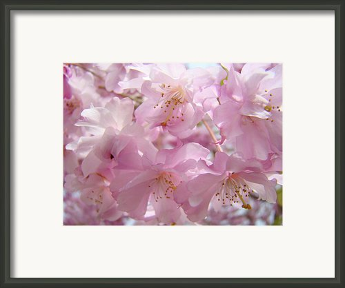 Tree Spring Pink Flower Blossoms Art Print Baslee Troutman Framed Print By Baslee Troutman Fine Art Prints
