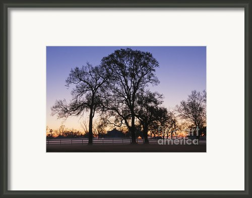 Trees And Fence In The Mist Framed Print By Jeremy Woodhouse