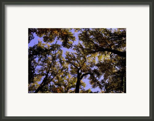 Trees Conversing Framed Print By Deborah  Crew-johnson