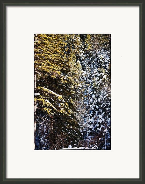 Trees In Taos Village Framed Print By Lisa  Spencer