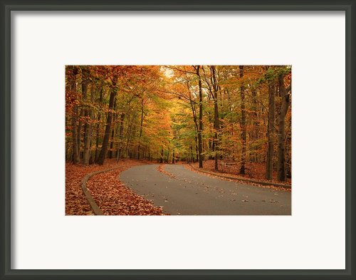 Trees Of Autumn - Holmdel Park Framed Print By Angie Mckenzie