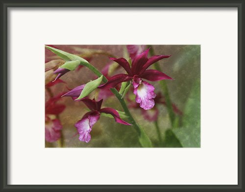 Tropical Beauty Framed Print By Debra And Dave Vanderlaan