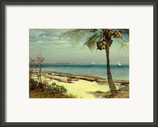 Tropical Coast Framed Print By Albert Bierstadt