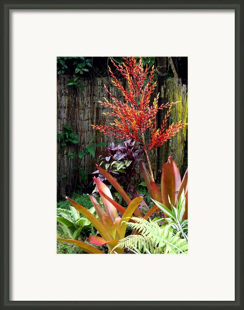 Tropical Garden Framed Print By Karon Melillo Devega