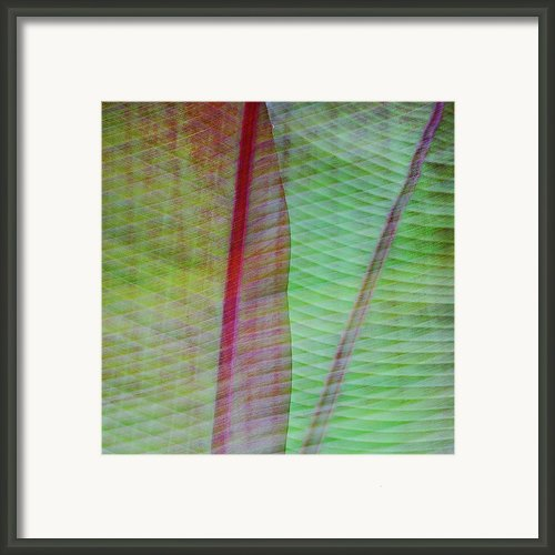 Tropical Leaves No 11  2009 Framed Print By Joseph Duba