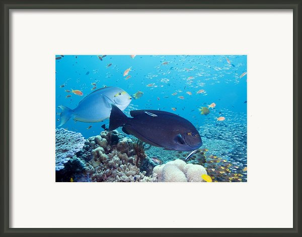 Tropical Reef Fish Framed Print By Georgette Douwma