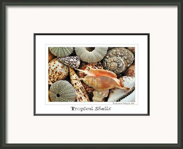 Tropical Shells... Greeting Card Framed Print By Kaye Menner