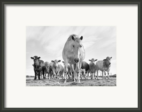 True Irish Wildlife Framed Print By Zarija Pavikevik