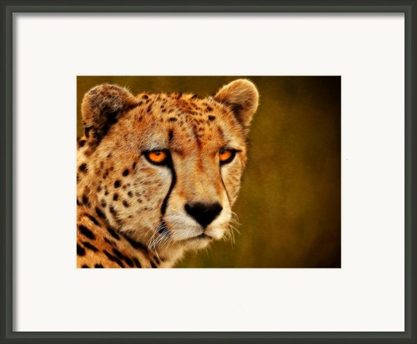 Try Me Framed Print By Ricky Barnard