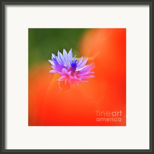 Tucked Away 2 Framed Print By Heiko Koehrer-wagner