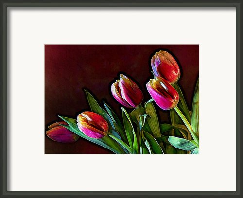 Tulip Traced Incandescence Framed Print By Bill Tiepelman