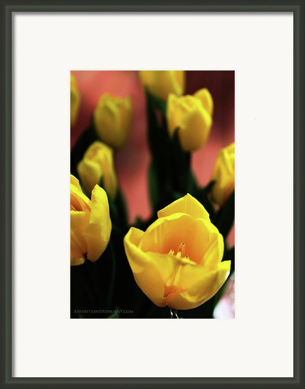 Tulips Framed Print By Matt Truiano