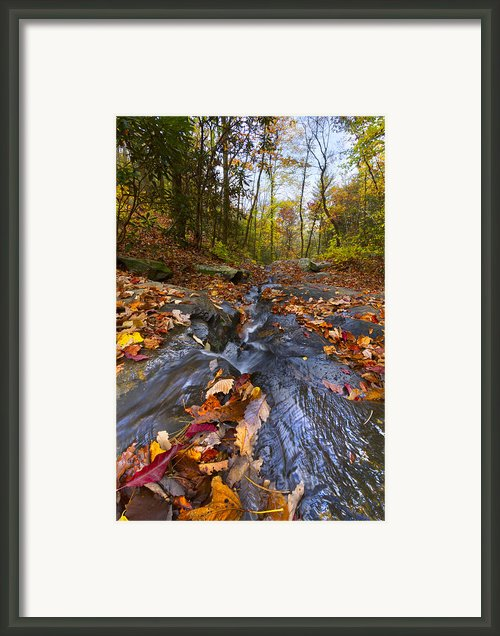Tumbling Leaves Framed Print By Debra And Dave Vanderlaan