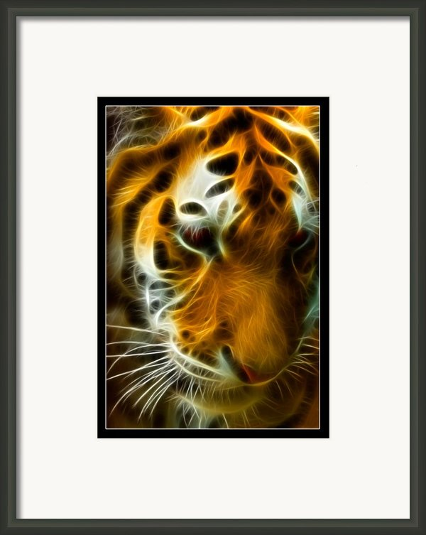 Turbulent Tiger Framed Print By Ricky Barnard