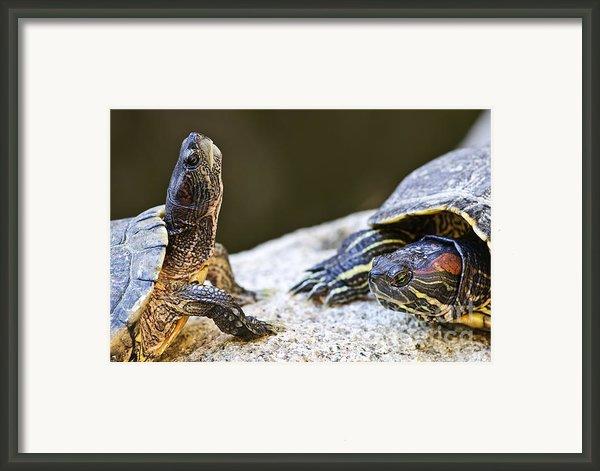 Turtle Conversation Framed Print By Elena Elisseeva