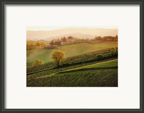 Tuscan Vinyards Framed Print By John And Tina Reid
