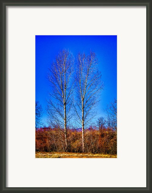 Twin Trees At South Platte Park Framed Print By David Patterson