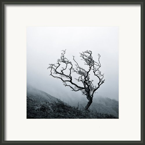 Twisted Framed Print By David Bowman