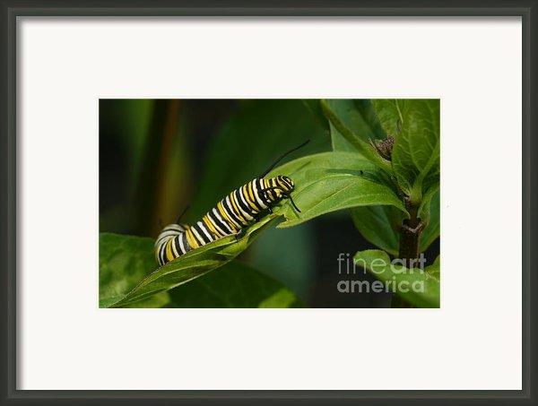 Two Caterpillars Framed Print By Steve Augustin