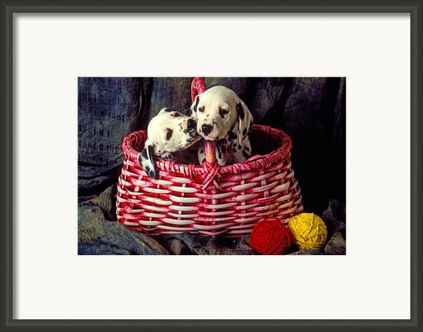 Two Dalmatian Puppies Framed Print By Garry Gay