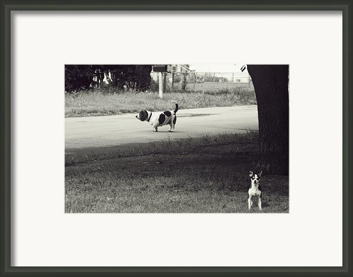 Two Dogs Framed Print By Toni Hopper