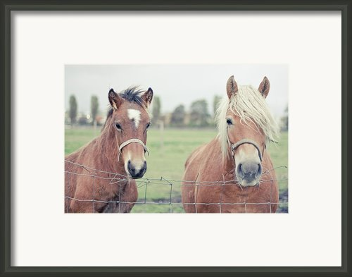 Two Horses Behind A Wired Fence Framed Print By Cindy Prins
