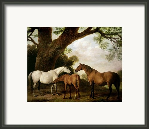 Two Mares And A Foal Framed Print By George Stubbs