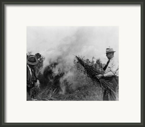 Two Men Burning Marijuana In Field Framed Print By Everett