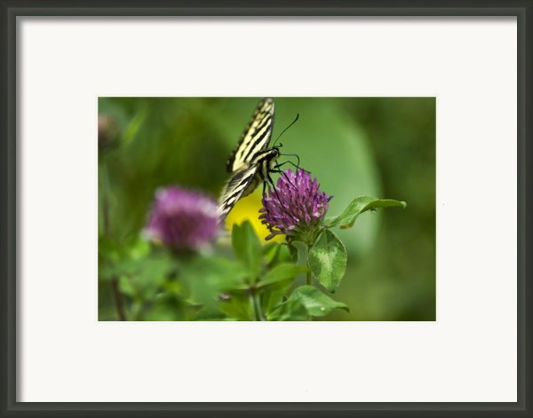 Two Sided Framed Print By Wayne Stadler