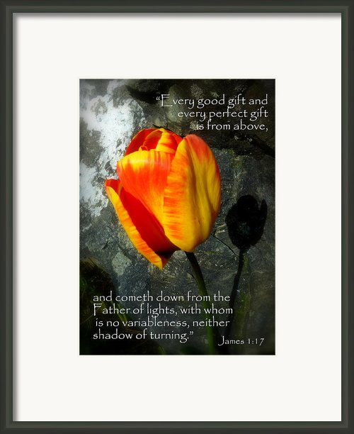 Two Tulips Shadow Scripture Framed Print By Cindy Wright