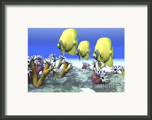 Two Yellow Butterflyfish Swim Among Framed Print By Corey Ford