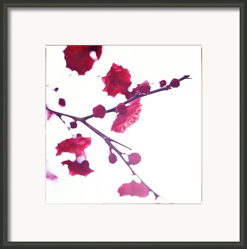 Ume Blossom Under The Sun Framed Print By Moaan