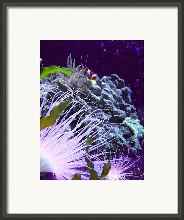 Undersea World Framed Print By Robin Hewitt