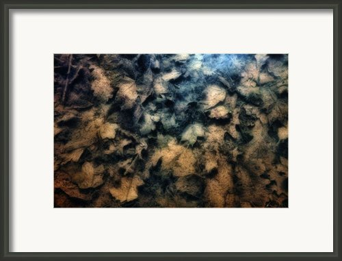 Underwater Leaves Framed Print By Tom Mc Nemar