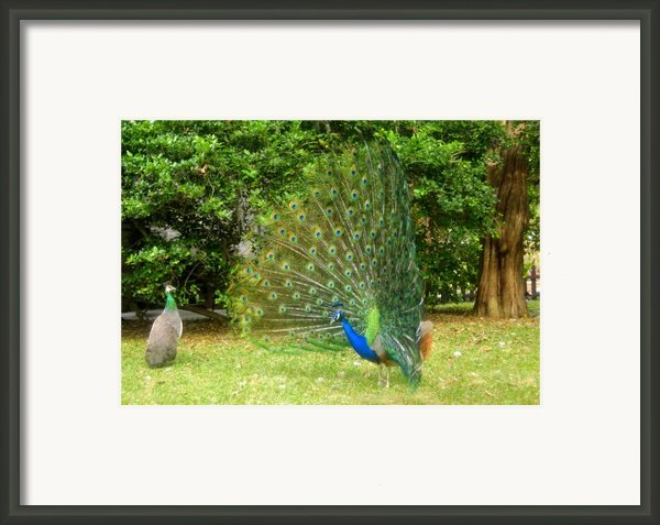 Unimpressed Framed Print By David Lee Thompson
