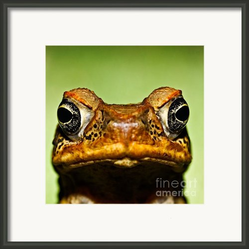 Unwanted Intruder Framed Print By Joerg Lingnau