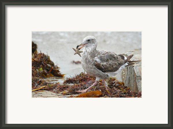 Unwilling Star Framed Print By Fraida Gutovich