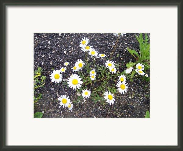 Up From The Asphalt I Framed Print By Anna Villarreal Garbis