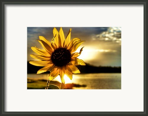 Up Lit Framed Print By Karen M Scovill