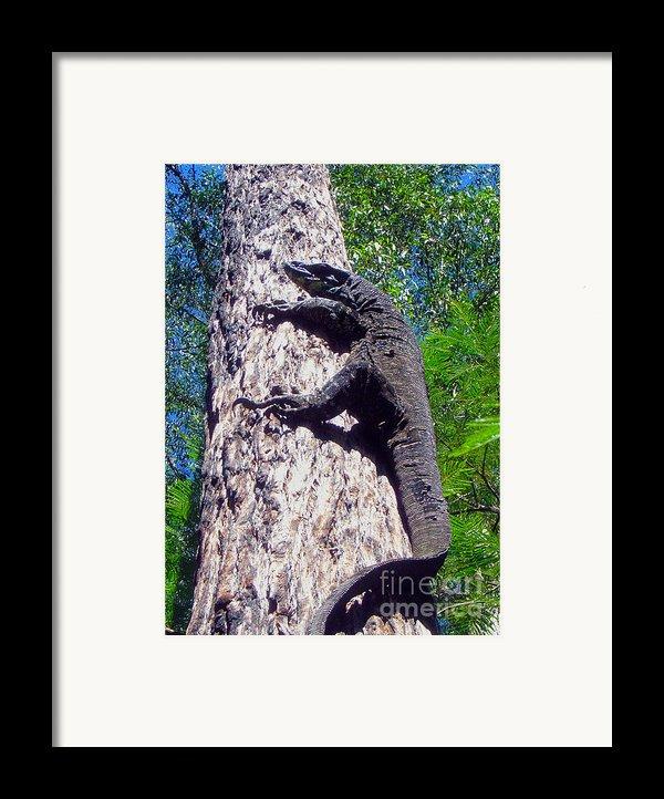 Up Ya Go Framed Print By Joanne Kocwin