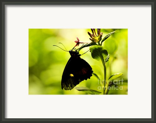 Upside Down Framed Print By Leslie Leda