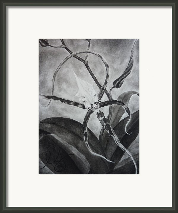 Upside-down Orchid Framed Print By Estephy Sabin Figueroa