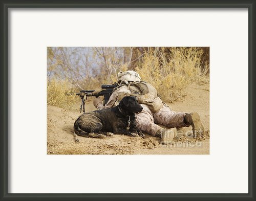 U.s. Marine And A Military Working Dog Framed Print By Stocktrek Images