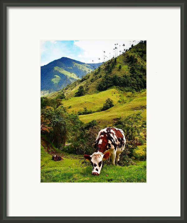Vaca Framed Print By Skip Hunt