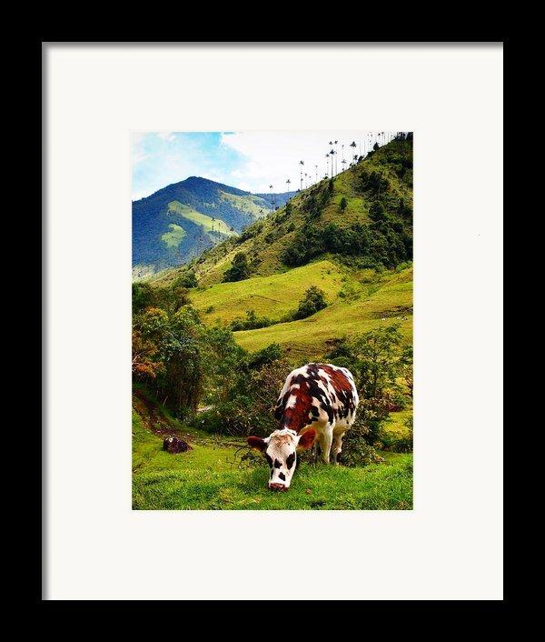 Vaca Framed Print By Skip Hunt