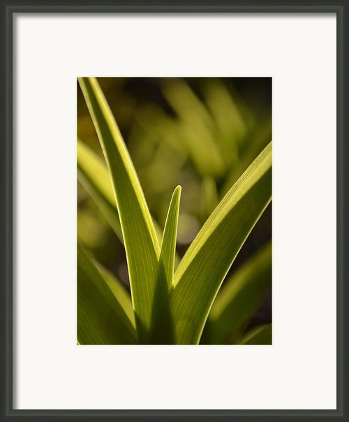 Variegated Light 1 Framed Print By Jd Grimes