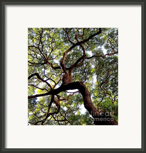 Veins Of Life Framed Print By Karen Wiles