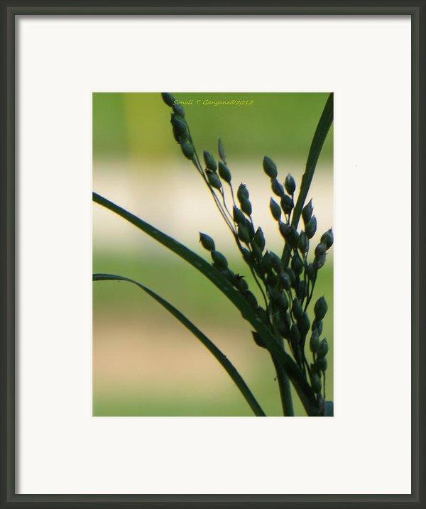 Verdant Grain Framed Print By Sonali Gangane