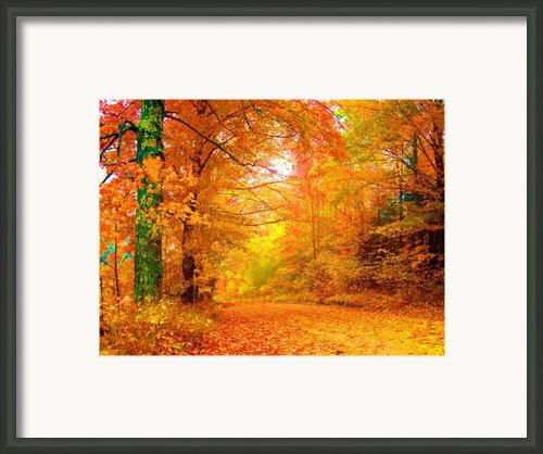 Vermont Autumn Framed Print By Vicky Brago-mitchell